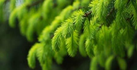 Waarom kiezen voor coniferen