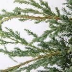 Juniperus squamata Blue Carpet, 5