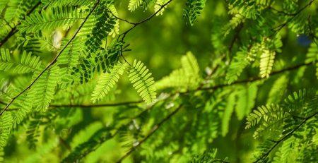 coniferen soorten tuin